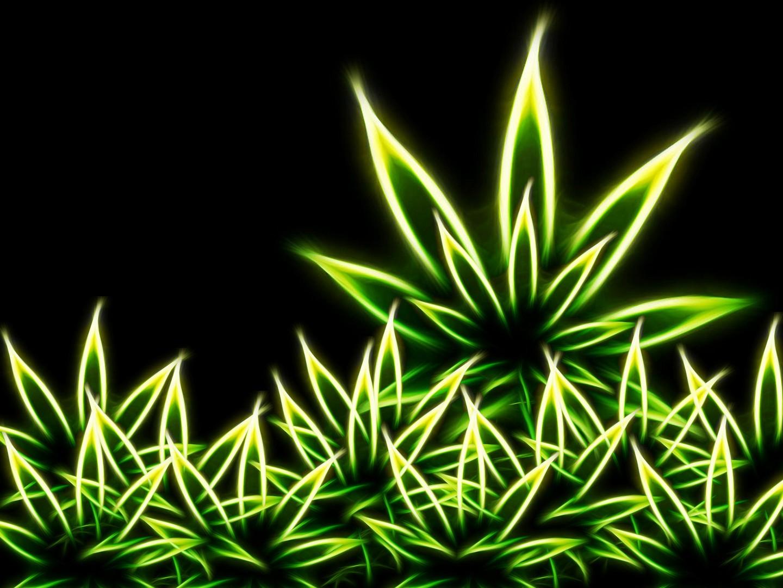 cannabis marijuana weed wallpaperbackgroundsscreensavers