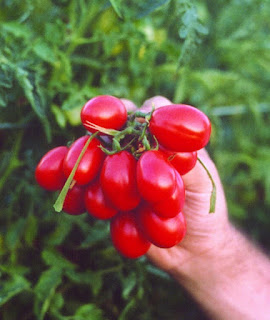L'Oro rosso per i Sommelier del pomodoro