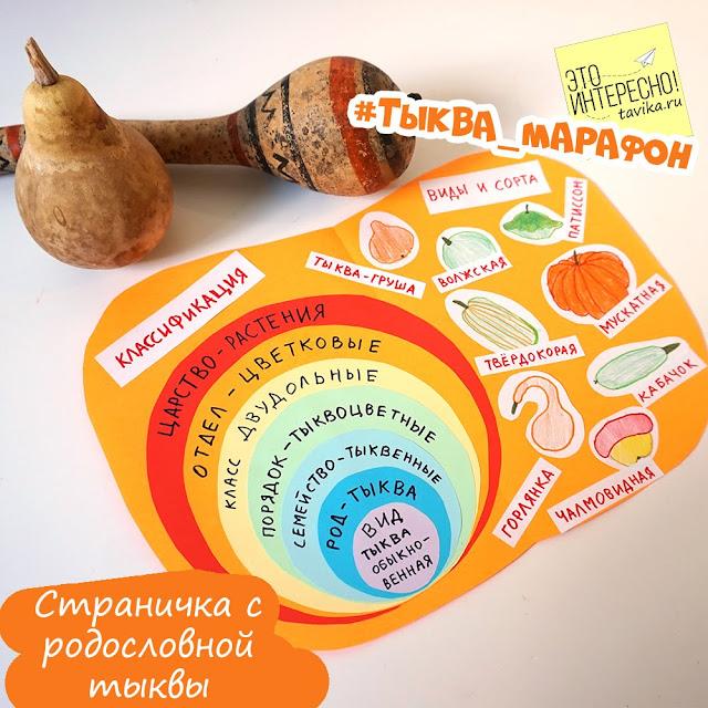 Детям о классификации растений
