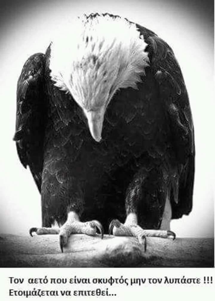 Γιατί τον αετό δεν κάνει να τον υποτιμάς!!!!!!