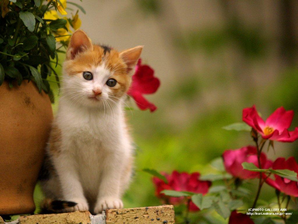 Perawatan Kucing Gambar Anak Kucing Imut Lagi Bergaya Di Pot Bunga
