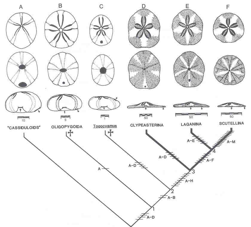 How To Make Paper Starfish