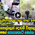 Man from Puttalam earns Rs 80,000 per month by selling Orange