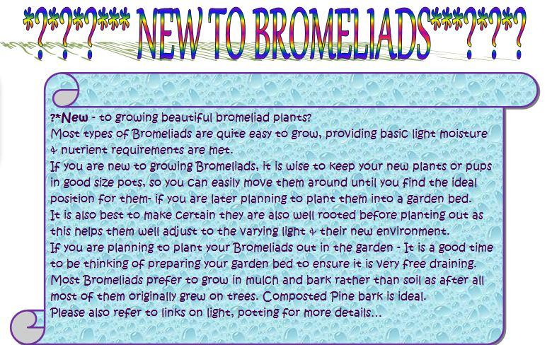 how to grow bromeliads from seed