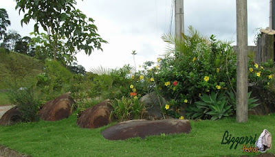 Pedra moledo para execução de paisagismo com as alamandas amarela, os lírios amarelo e as mudas de agave com o gramado com grama esmeralda.
