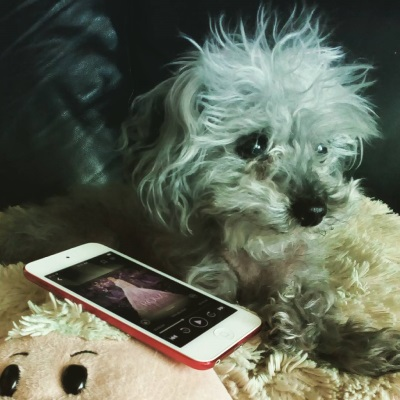 Murchie lies on his sheep-shaped pillow. Beside him is a white iPod with The Crown's purple-tinted cover on its screen. The cover features a pale-skinned girl in a purple ball gown.
