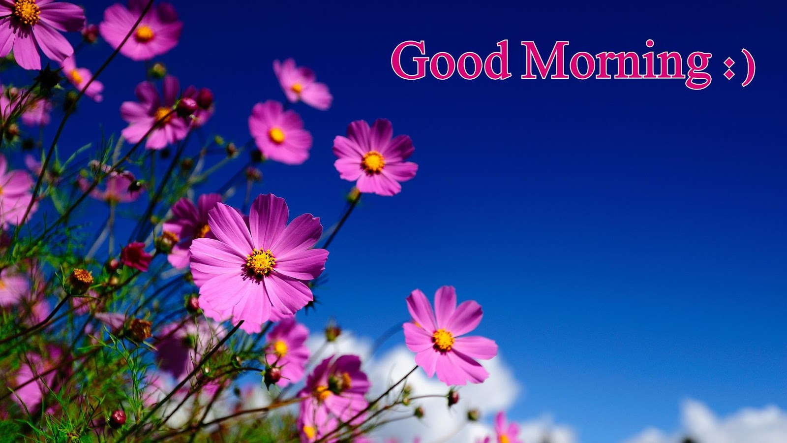 40 Good Morning Friend Have A Nice Day Images Freshmorningquotes