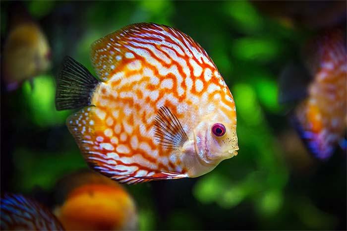 Ciri-ciri Ikan Tidur