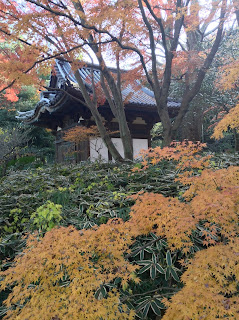 Sankeien autumn