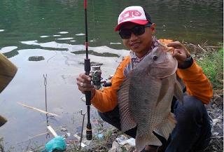 Umpan-Jitu-Ikan-Nila