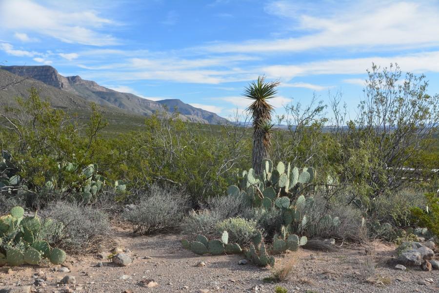 Dans le désert du Nouveau-Mexique