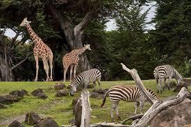 best 10 African Safari Operator