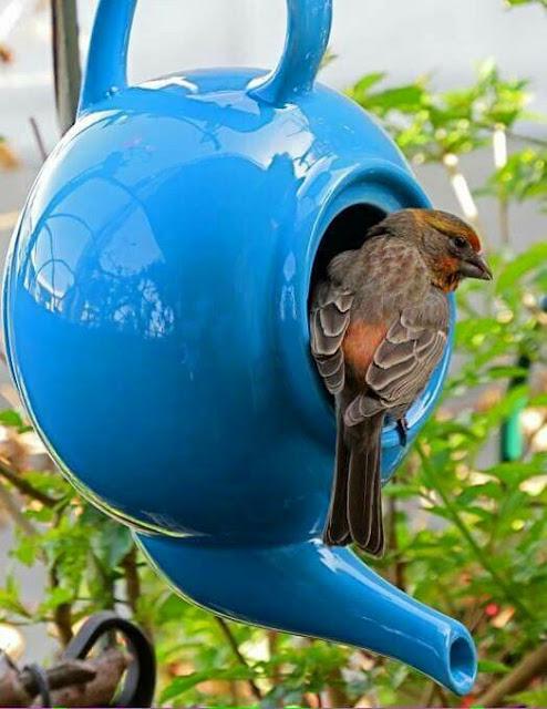 casinhas-e-passarinhos-originais-e-fofas