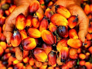morfologi-buah-kelapa-sawit.jpg