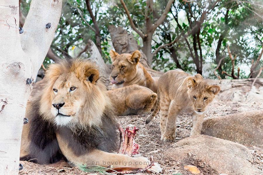 visit-werribee-zoo-victoria-australia