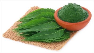 combatir la caspa con hojas de neem