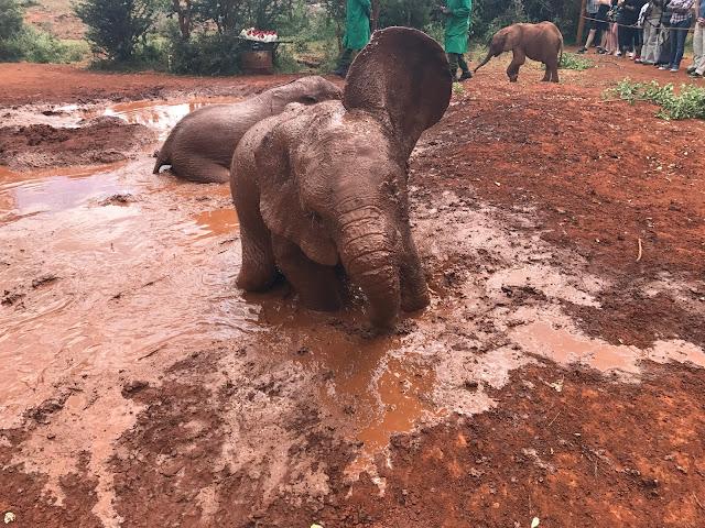 David sheldrick-elephant orphanage-orfanato elefantes-viaje-turismo-nairobi-kenya-africa-2018-2019-2010