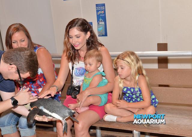 Amy West and family pet a penguin at the Newport Aquarium