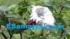 ஊமத்தை இலையின் மருத்துவ பயன்கள் | Medical Benefits of Datura leaf !