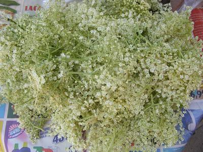 Floarea socului recoltata retete,