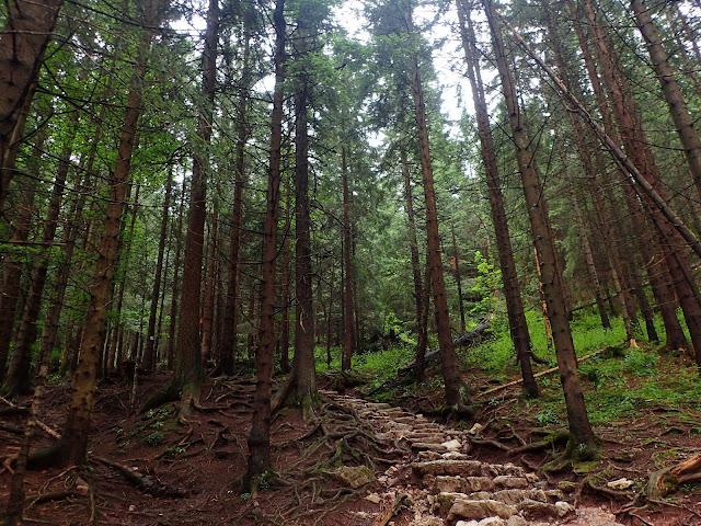 Las ponad Strążyską