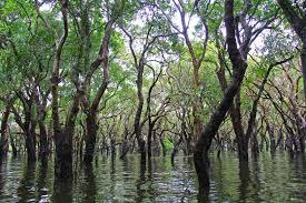 [Lengkap] Fungsi dan Manfaat Hutan Bakau (Mangrove)