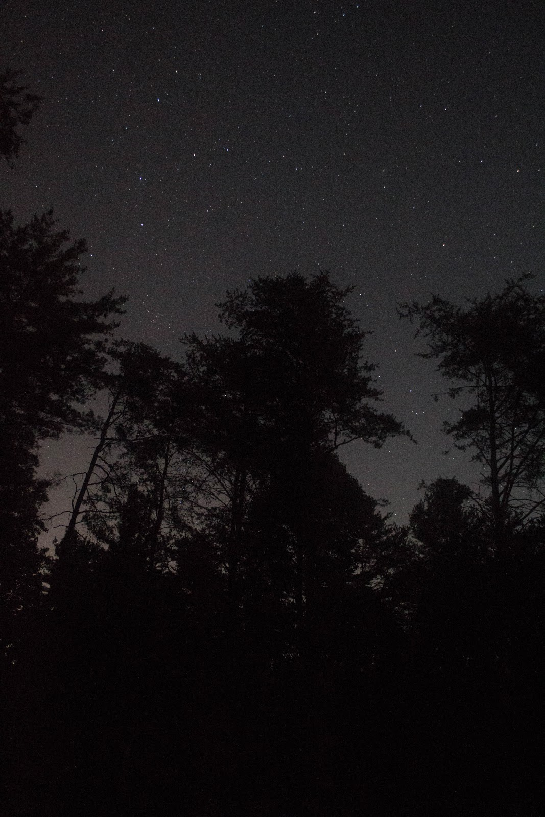 stars and black tree silhouettes