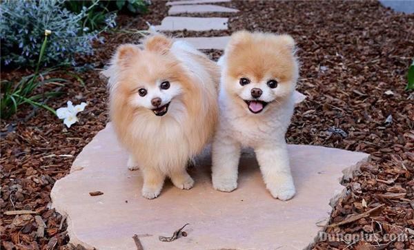hình ảnh chó con dễ thương nhất 3