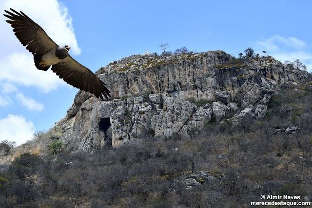 Águias Chilenas da Serra do Pará são destaque no programa Nordeste Viver e Preservar deste sábado (15), na Globo Nordeste
