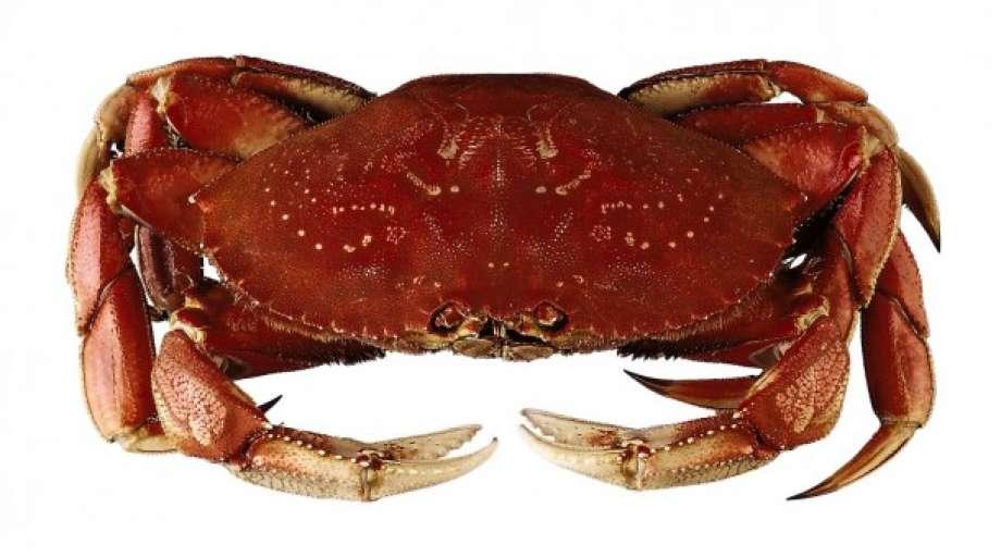 Crab for Sale Online - Frozen Mud Crab Supplier, Crab Meat