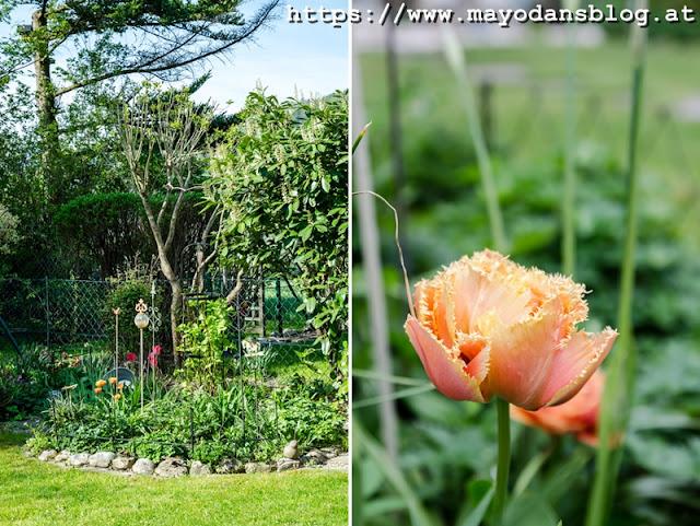 Frühlingsgarten mit Tulpen