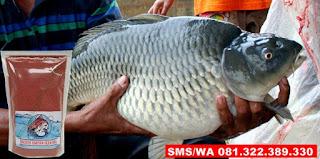 Umpan Ikan Mas Kilo Gebrus