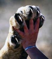Aslan kaplan pençesi ve insan eli