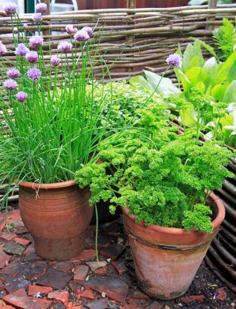 Small Gardens Grown in Variety of Containers