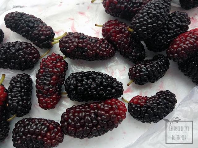 Owoce morwy białej - porównanie owoców w Polsce i w Chinach, czy jest różnica? Jak wygląda chińska morwa, Białe owoce morwy i czarne owoce morwy jak rozróżnić morwę białą od czarnej?