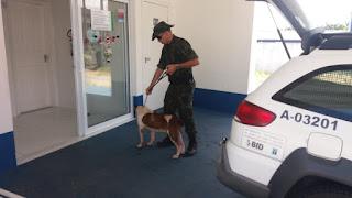Polícia Ambiental resgatou pitbull idoso abandonado em uma casa