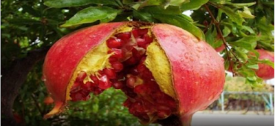 EAT THIS FRUIT EVERY DAY FOR GOOD BLOOD AND FIGHT INTESTINAL PROBLEMS!