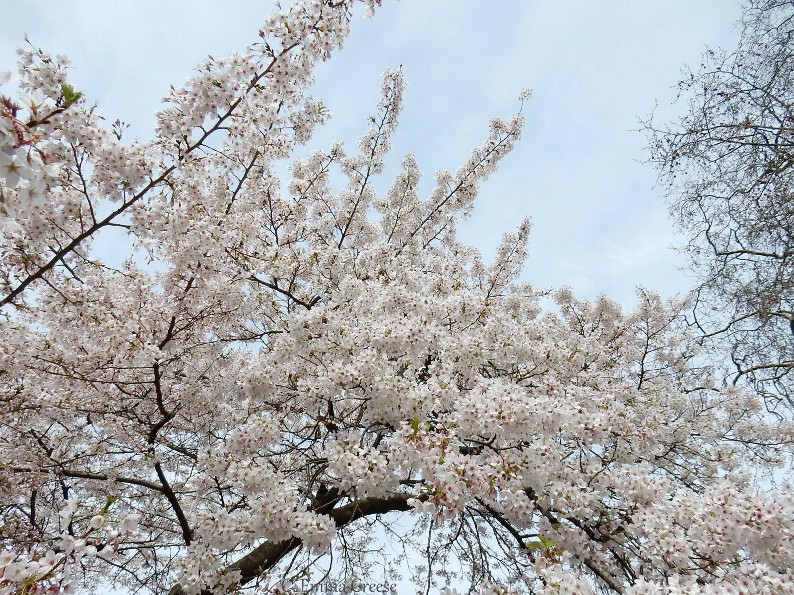 April Blossom Nude Photos 23