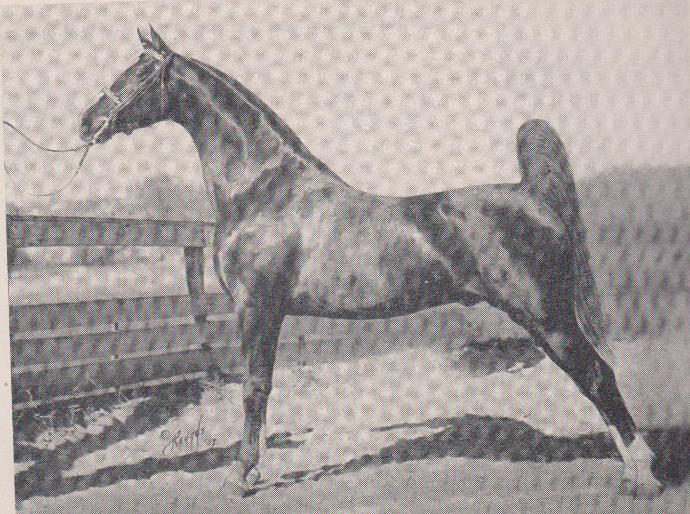 The American Saddlebred: News from January 1945 National ...