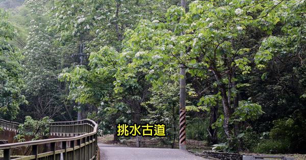 彰化芬園|2019挑水古道桐花祭|賞桐花兼運動強身|休閒好去處