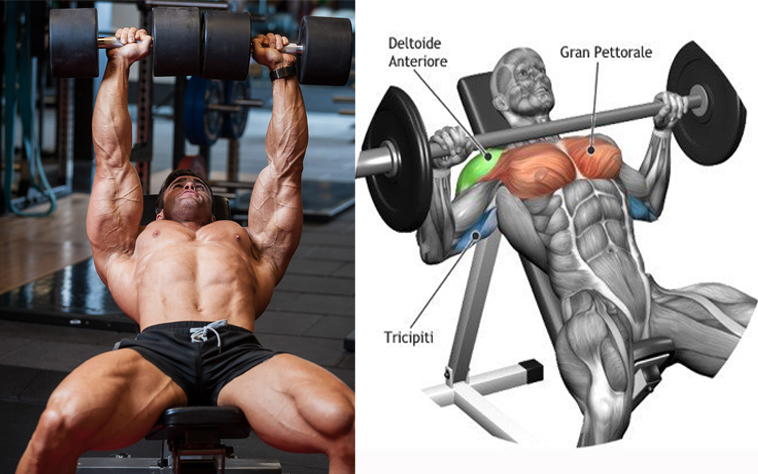 dumbbells vs barbells for chest