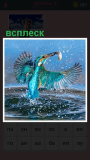 над водой птица с добычей в клюве делает всплеск крыльями