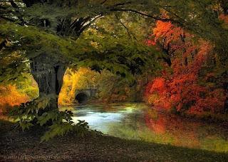 admirables-imagenes-naturales-ambientes