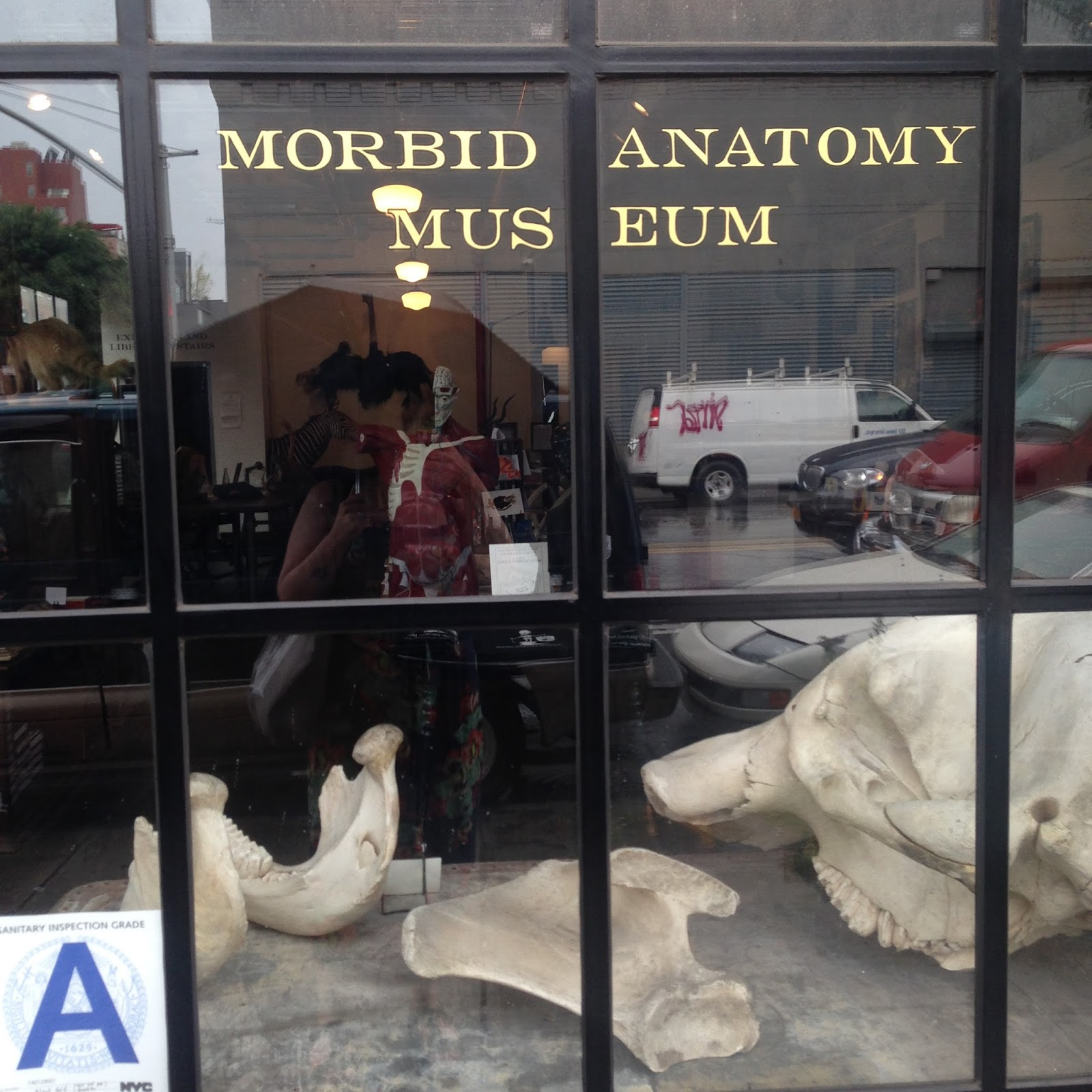 The Ministry of Curiosity: Taxidermy at the Morbid Anatomy Museum