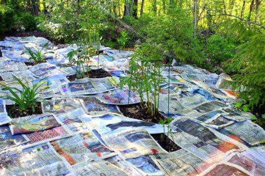 periodico malas hierbas