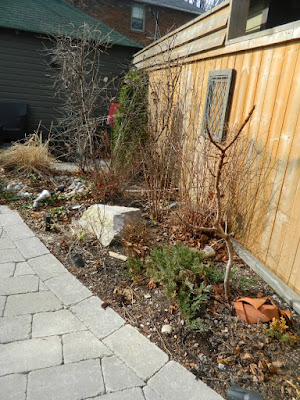 Leaside Toronto Spring Garden Cleanup before by Paul Jung Gardening Services
