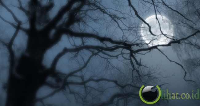 The Moon Trees