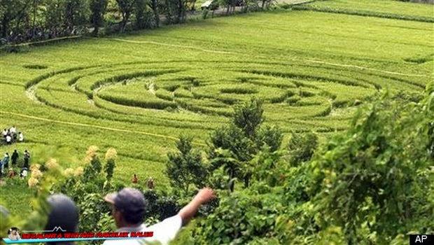 Crop circle yang Terjadi di Indonesia