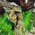 Veja as fotos do desfile da Santa Cruz