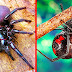 Top most vicious Spiders in the world